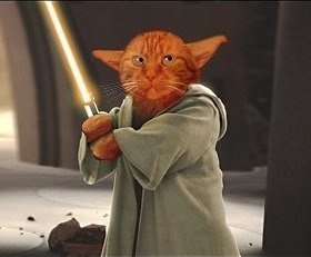 We were entering the domain of the Cat called Cat...Jedi mind tricks and good food were sure to follow